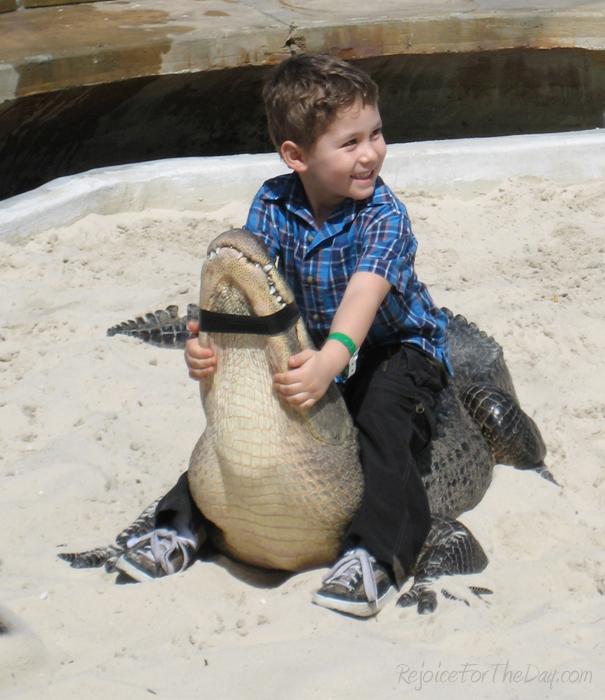 On an Alligator