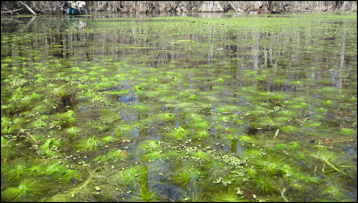 swamp4
