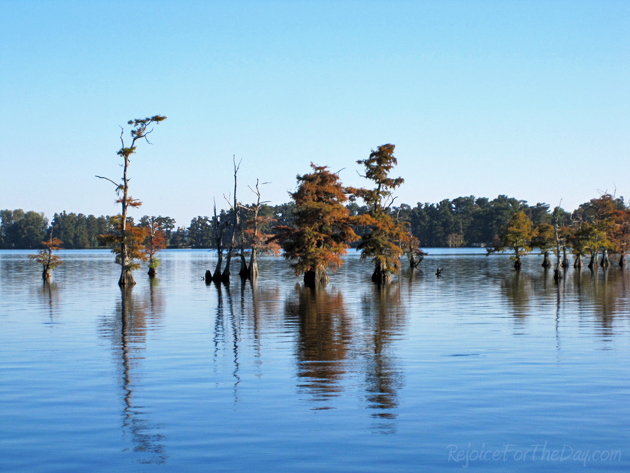 Reelfoot Fall