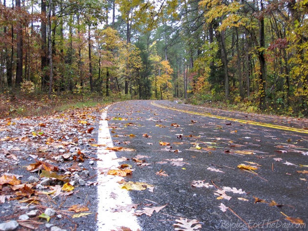 Fall Leaves Drive