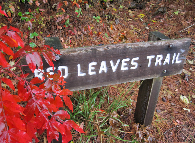 Fall Leaves Red