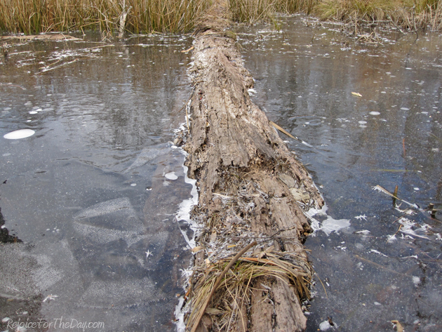 a log in the frozen pond