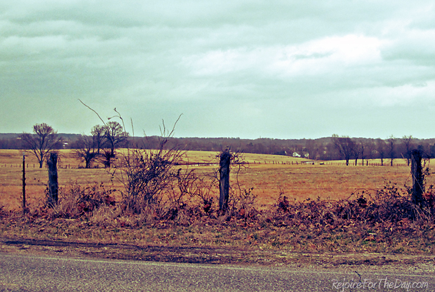 stormy pasture
