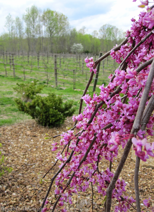 Blooms and Vines