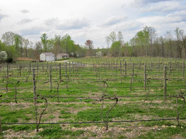 Natchez Hills vines