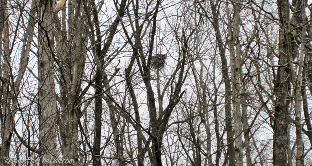 Nature nest