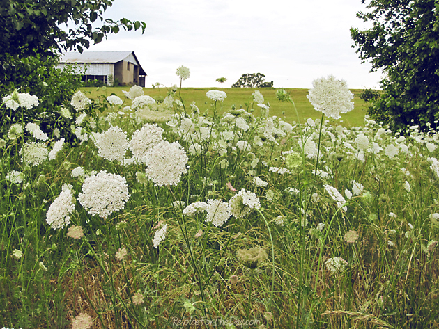 Tennessee wild flowers