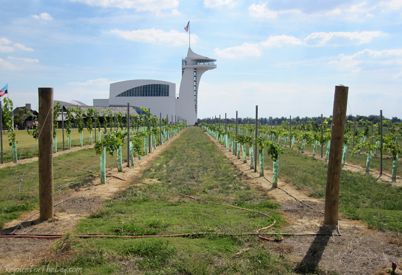 Discovery Park vineyard