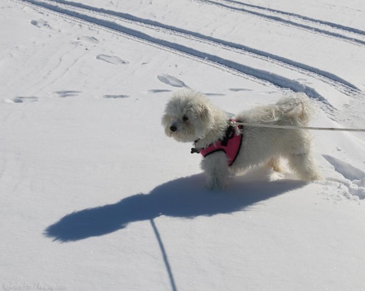 Yuki in the Snow
