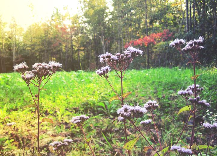 fall flowers edit