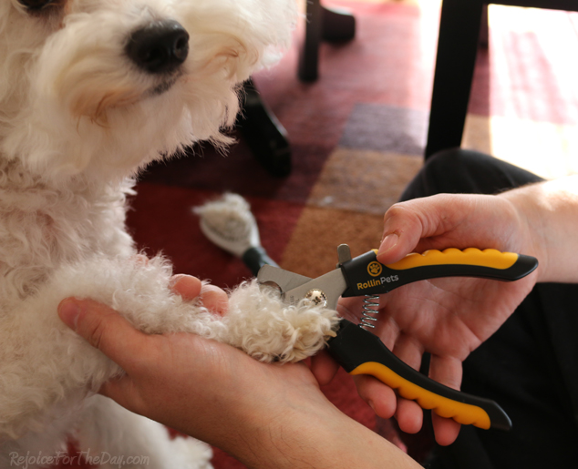 Rollin Pets clippers 2