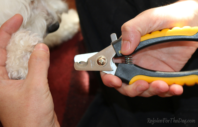 Rollin Pets Nail Clippers 2