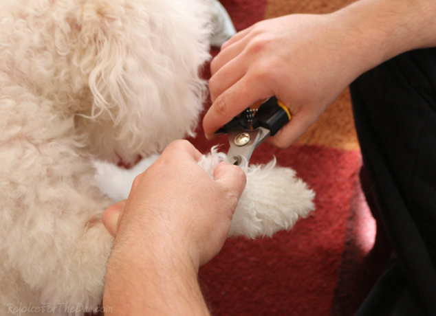 Rollin Pets nail clippers