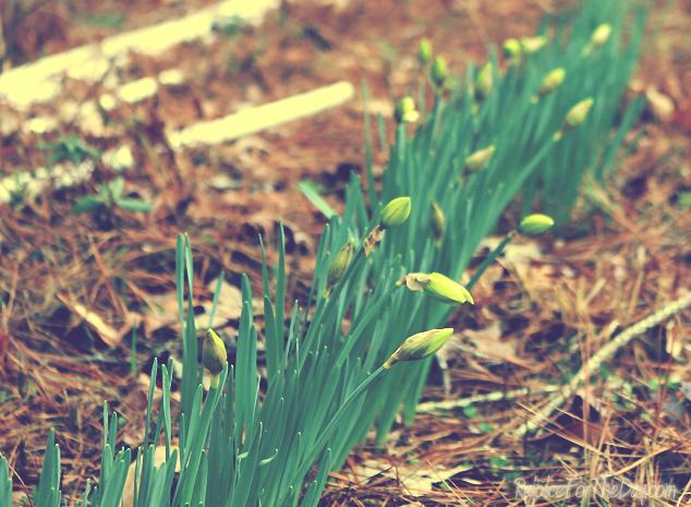 signs of spring edit