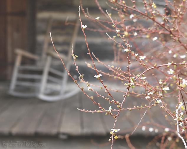 bloomin twigs