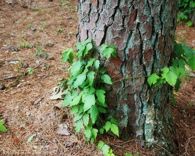 vines on a tree