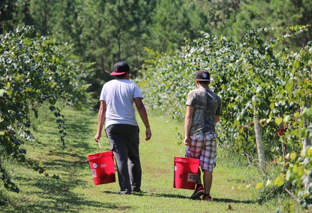 boys-in-the-vineyard-2