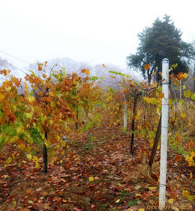 fall-in-the-vineyard