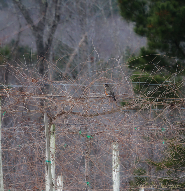 bird-on-a-wire-2