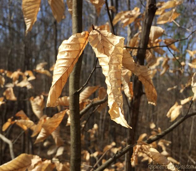 crunchy-leaves