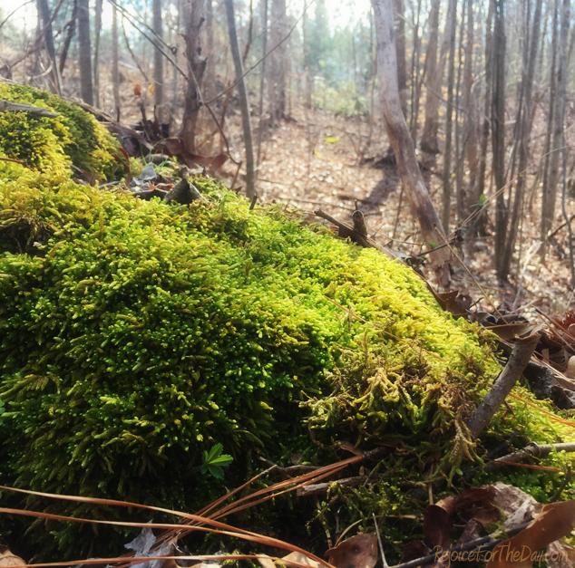 mossy-woods