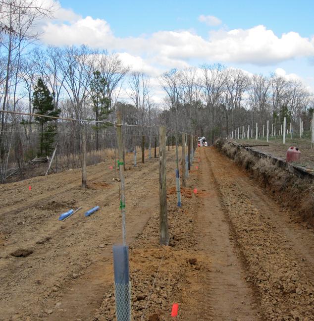 new-vineyard-rows