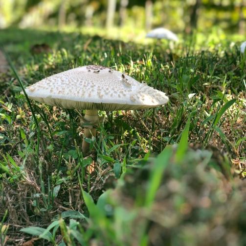 Morning there, mushroom.