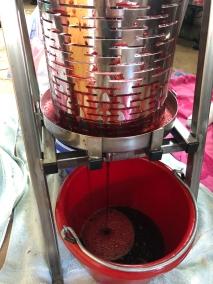 Pressing blackberries.